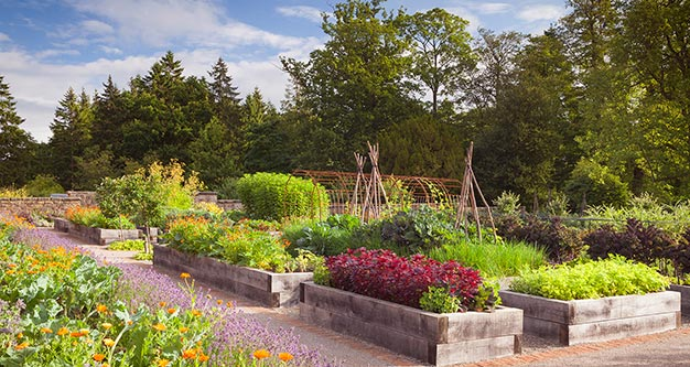 Kitchen Garden at Rudding Park