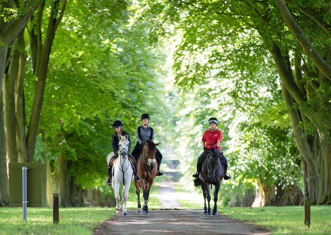 Three people riding on horses through woodland