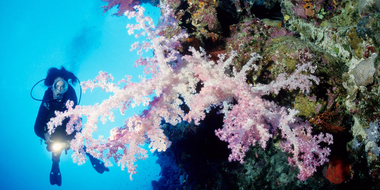 Soma Bay Diving