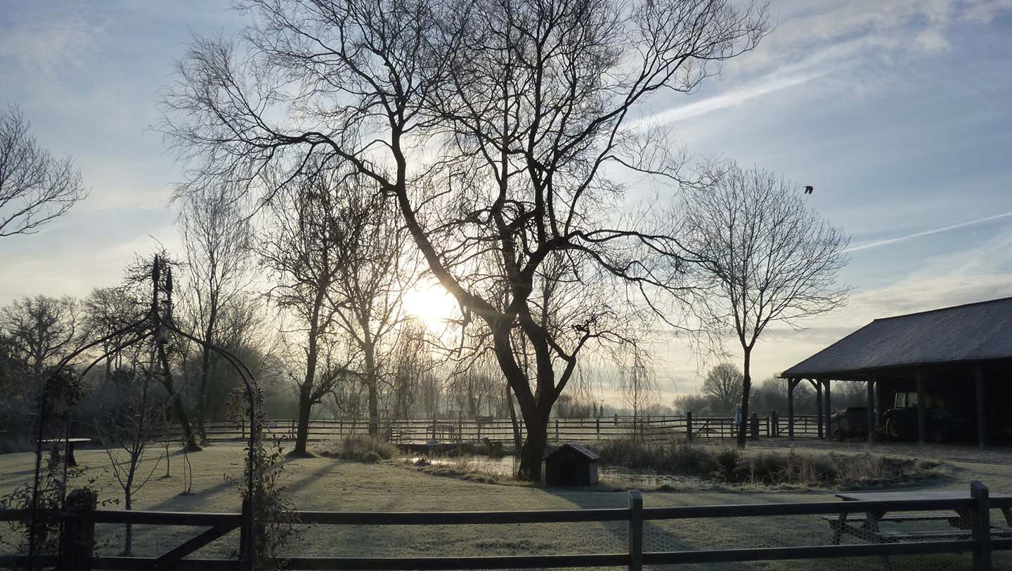green-farm-tree-in-winter