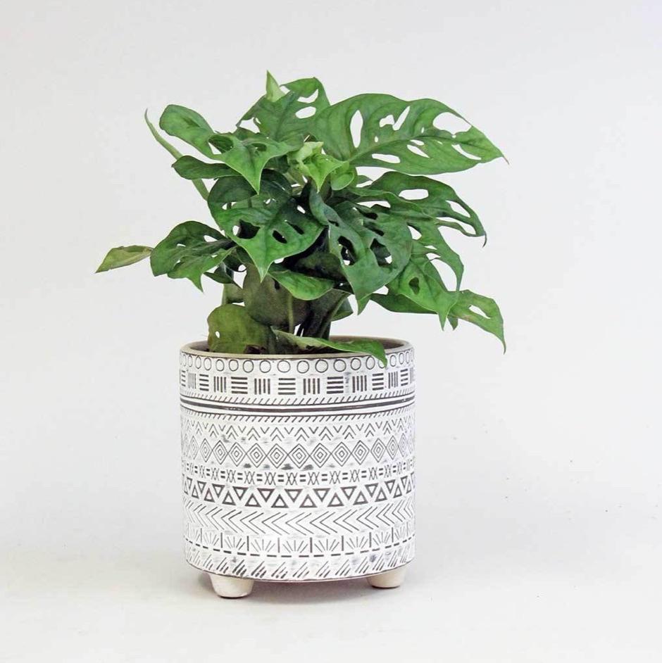 Bloombox Club indoor plant