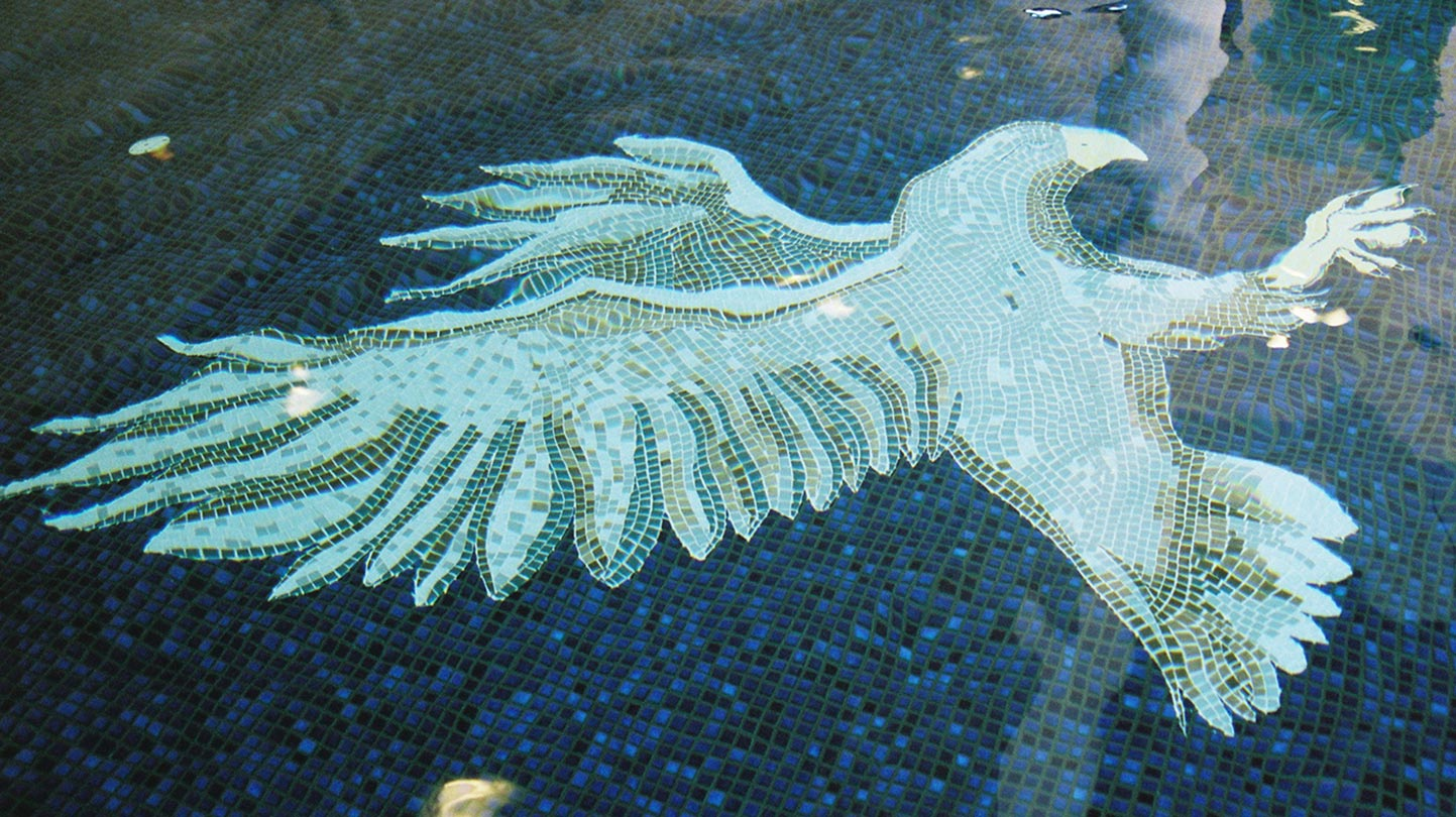 eagle-in-pool